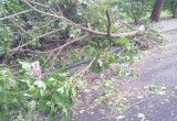 Tree uprooted by massive thunderstorm